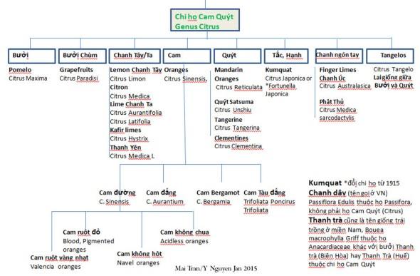 Citrus Taxo Chart